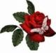 Różyczka87